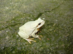 Amphibian in Focus