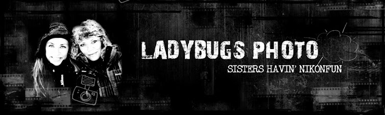Ladybugs photo