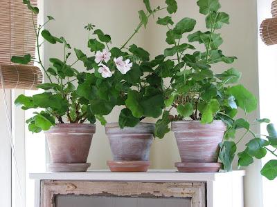 http://1.bp.blogspot.com/_H98pySOp02E/Slo2ovUCveI/AAAAAAAAAcE/h3hJCL705pI/s400/vasos+c+plantinhas.jpg