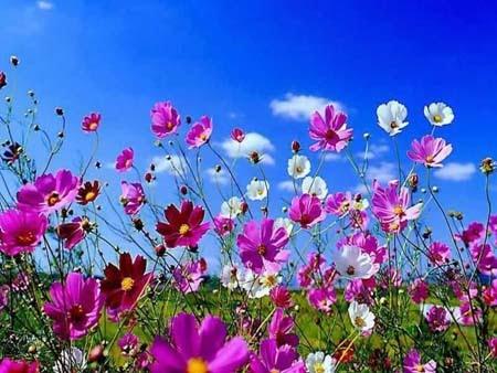 spring landscape wallpaper