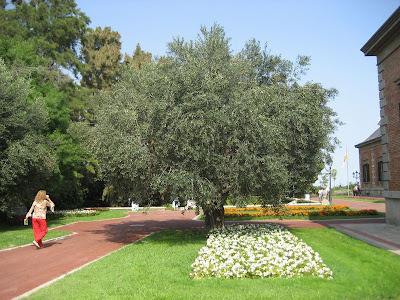 Hablemos de jardines el jard n del palacete alb niz de for Jardines joan maragall