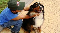 Proj. Cães e Crianças Autistas