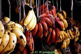 Couleur Banane