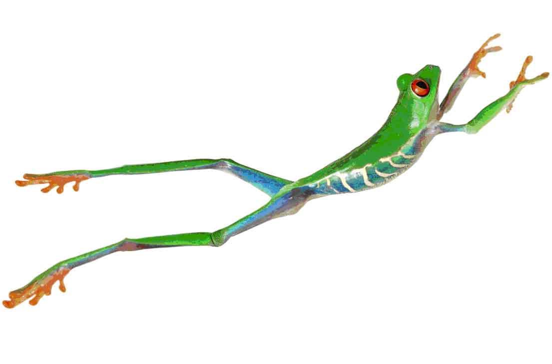 [frog.jpg]