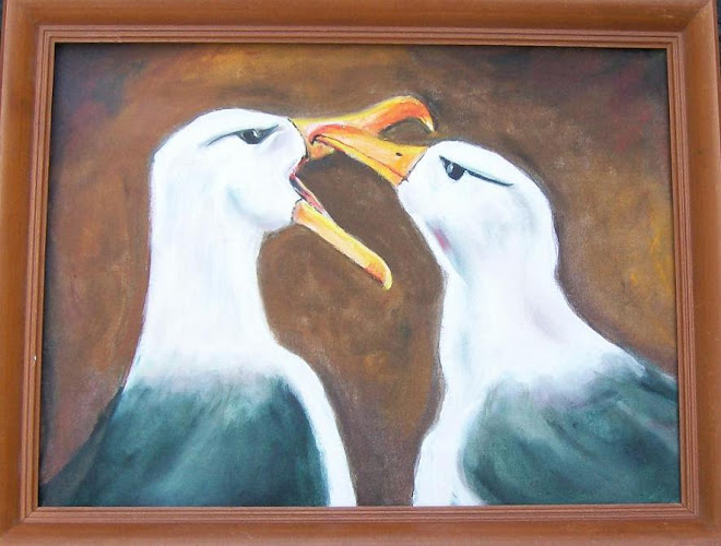 Albatross # 164