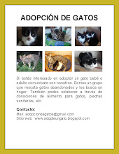 Gatos en Adopcin