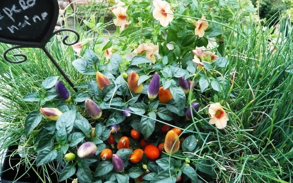 ... soleggiato per coltivare un piccolo orto aromatico - BLOSSOM ZINE BLOG