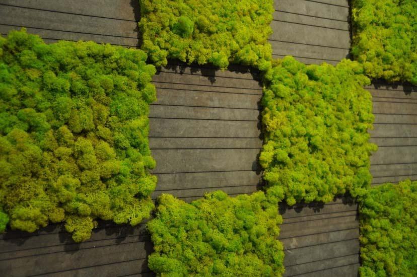 Un muschio naturale indoor moss design blossom zine