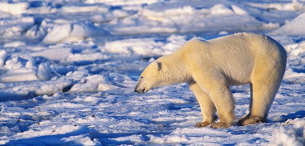 Démasquer les négationnistes du réchauffement climatique