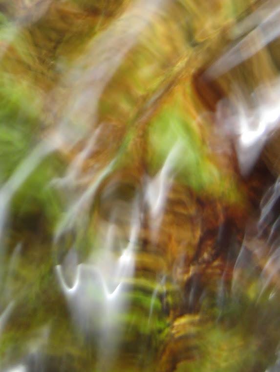 Visage d'algue sur une pierre