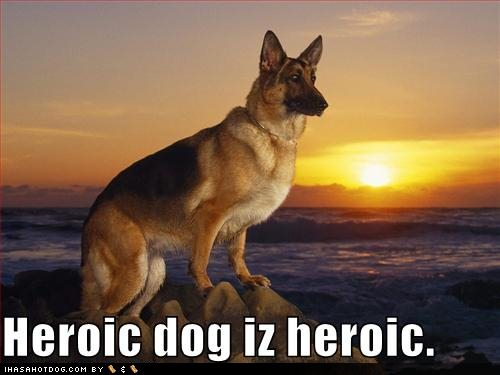[funny-dog-pictures-your-dog-is-heroic.jpg]