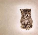 J'ai un joli petit chat...