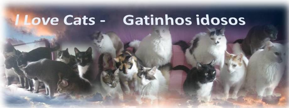 Gatinhos idosos