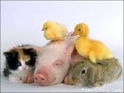 SOCIEDAD MENDOCINA PROTECTORA DE ANIMALES