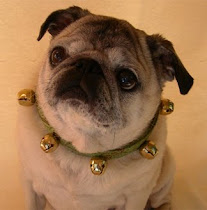 Skippy the Original Spokes-Pug for Linden Line Designs