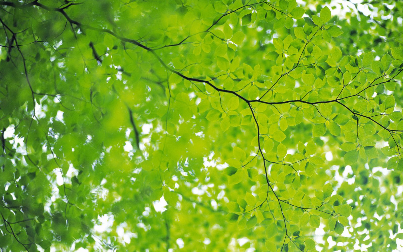 Green Leaves and Green...