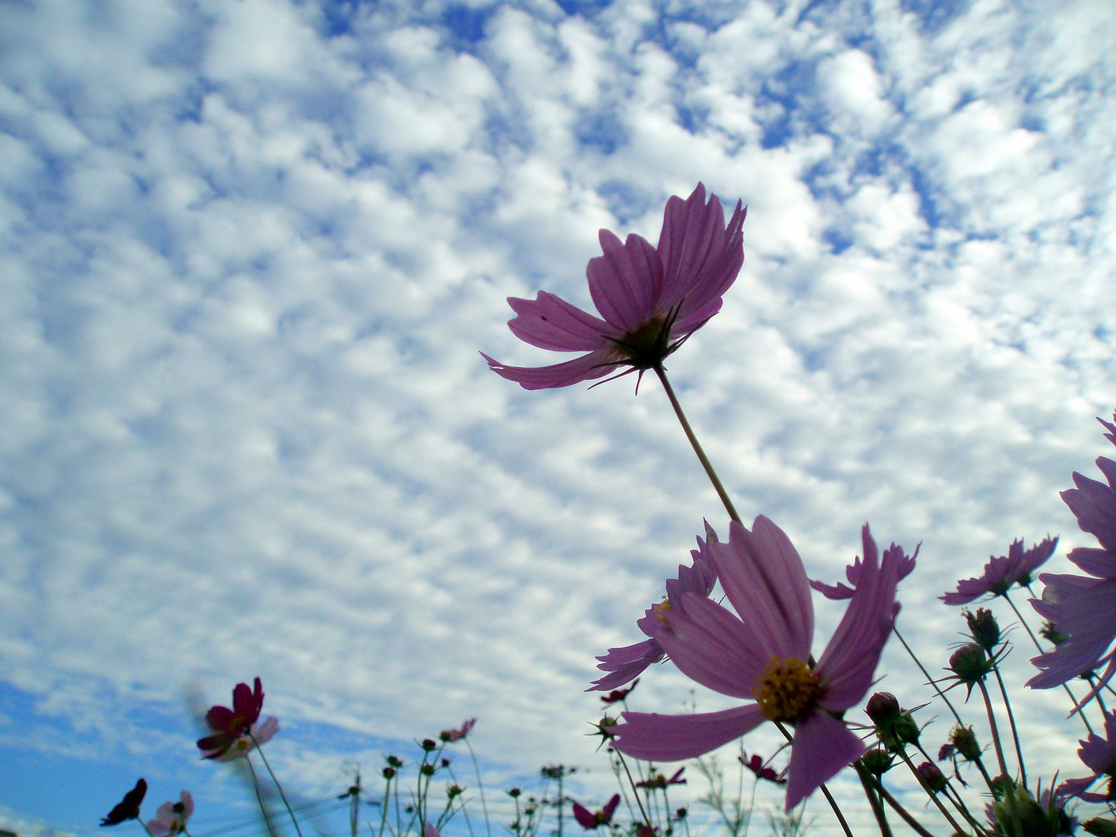 Beautiful Flowers in Sky Background