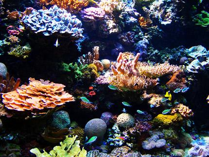 Coral Reefs Dying From Climate