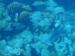 abundance of fish