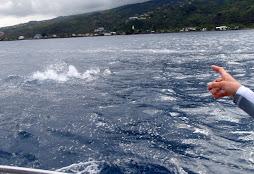 Ahoy -- dolphins