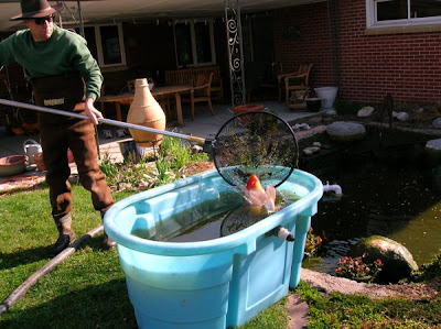 The art garden pond cleaning day for Temporary koi pond