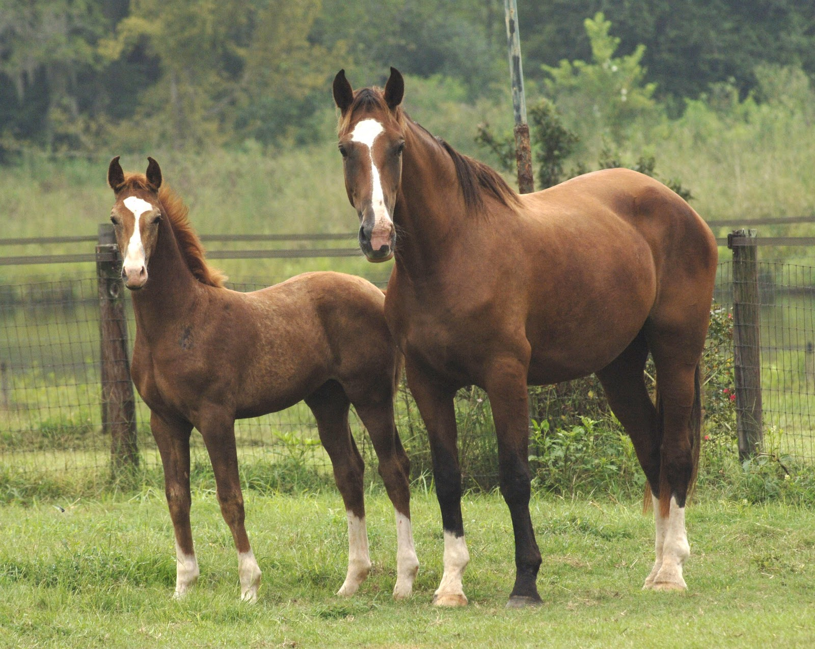 Windhover Farm Windhover Farm Horses For Sale