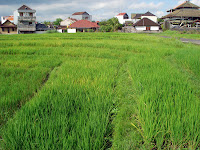 houses that can see the rice field from their veranda