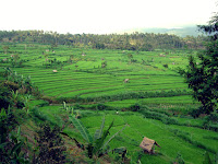 view of ubud