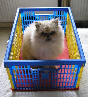 Crate o' Cat