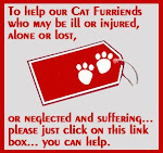 Help Our Cat Friends!