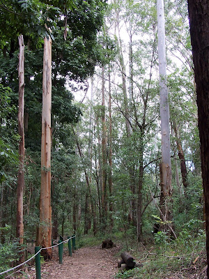 Dis ongelooflik hoe hoog bome in meer as 50 jaar kan groei