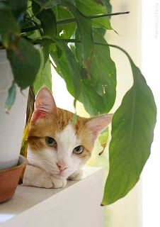 Viridis les plantes et les chats for Plante toxique chat