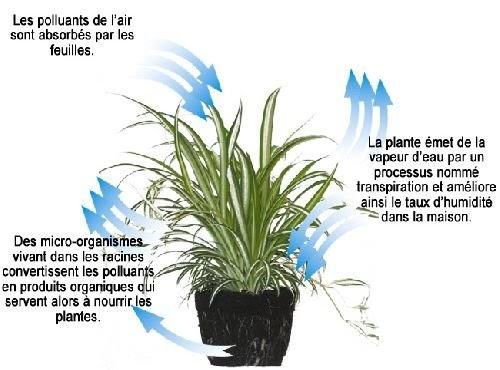 viridis des plantes pour purifier l 39 air. Black Bedroom Furniture Sets. Home Design Ideas