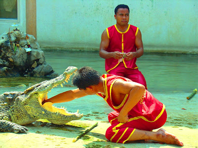 circus man sticking his hand into crocodile mouth