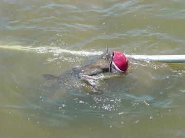 freshwater lures: latest soft plastic lures for catfish, Hard Baits