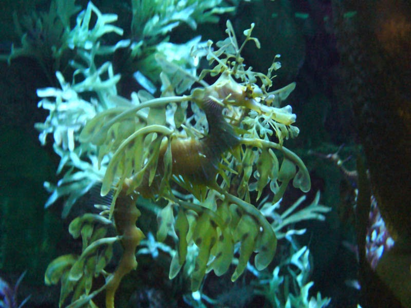 My Temple Of Nature Searching For Sea Dragons