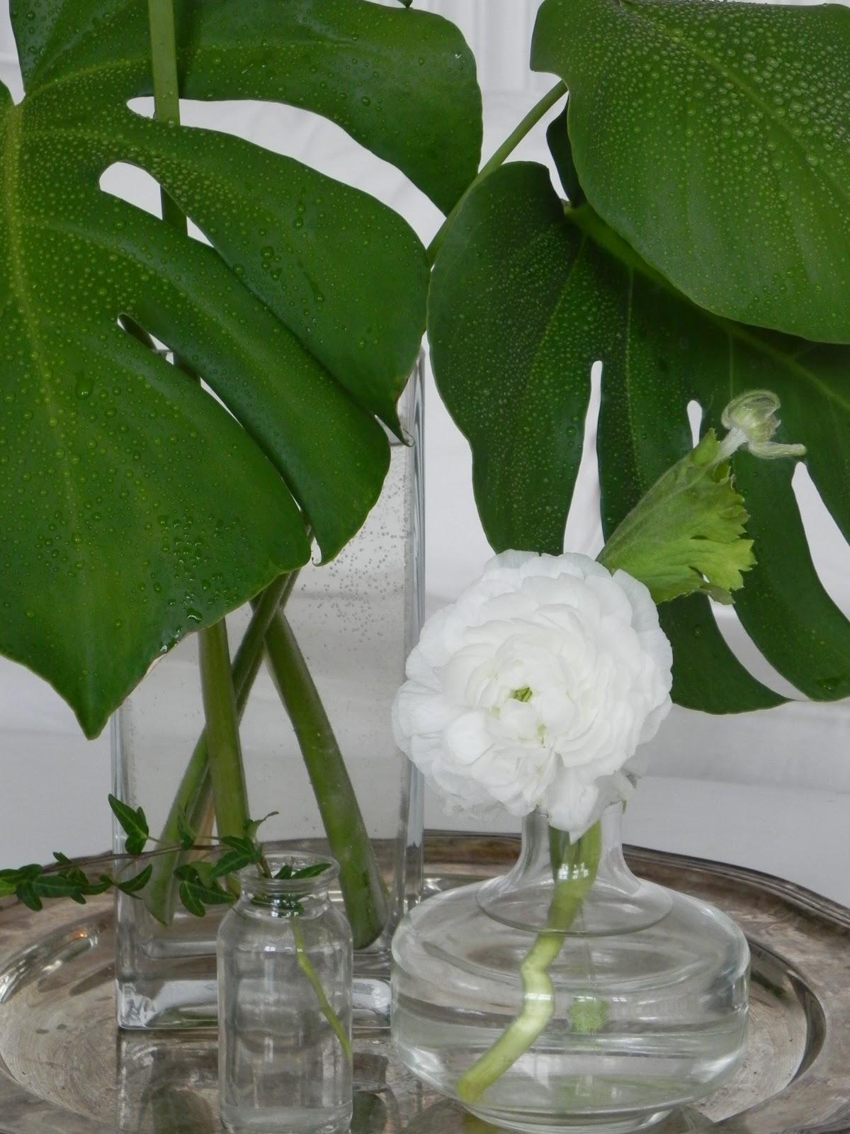 växt med stora blad