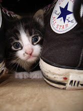 De felinos y otros hermanos