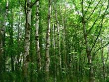 Dal bosco