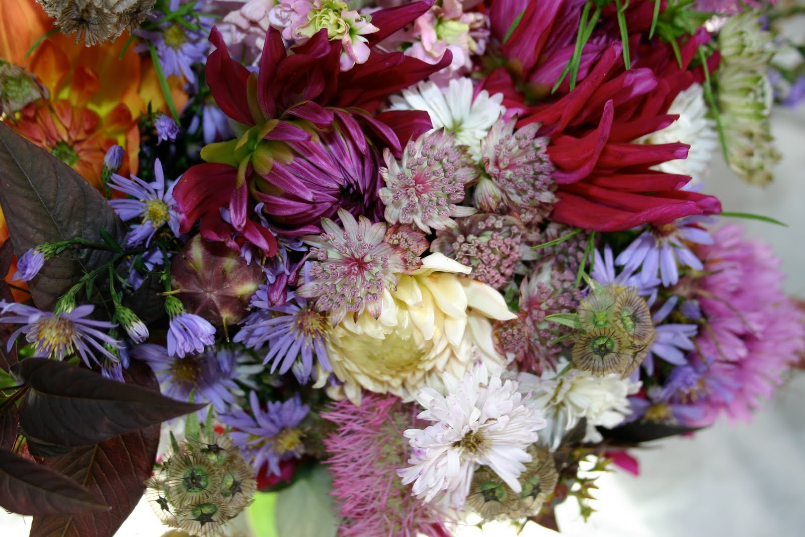 REAL CUT FLOWERS september colours