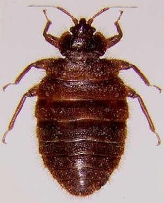 最古怪的蟲 家庭暴力 - 最古怪的蟲 被戲稱為家庭暴力的小蟲