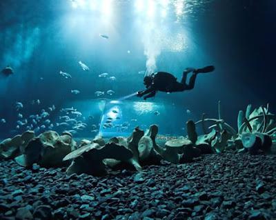 世界11大海底墳墓(三) 抹香鯨的骨骼
