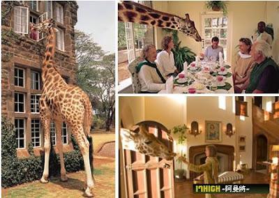 十大瘋狂酒店 - 長頸鹿體驗酒店