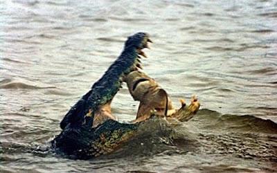 鱷魚吞 鯊魚