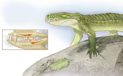 貓鱷魚 化石 Pakasuchus kapilimai