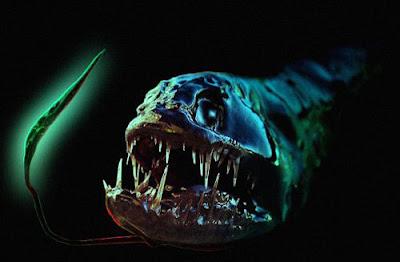 日本海域新物種 深海龍魚