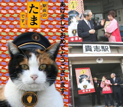 貓臉車站 - 貴志車站貓站長小玉(たま)