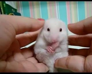 嚇呆的老鼠