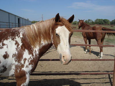 Kit's Frugal Spending tips for horses