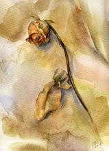 """""""Como cuando se abre una flor y revela el corazón que no tiene """" Alejandra Pizarnik"""
